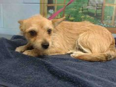 11/20/16 - SAN BERNADINO, CA - SAD GIRL - DUMPED BY OWNER - NEEDS LOVING HOME OR WILL BE KILLED.  PLEASE SAVE HER!