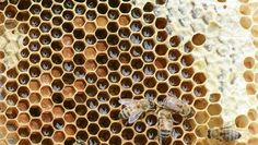 The future is sweet: Honeybees are in trouble, but SLush Fund partner Miels d'Anicet is working to save them—one queen bee at a time.