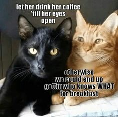 hilarious animals 40 Hilarious Animal Pictures That Are Priceless - Cute Animal Memes, Funny Animal Quotes, Cat Quotes, Cute Funny Animals, Funny Animal Pictures, Funny Cute, Animal Captions, Animal Funnies, Silly Cats