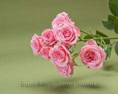Baby Rio® LYDIA Spray Rose