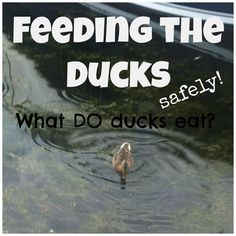 """Feeding the ducks with kids 