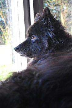 Pitter watching out the window.  He loves to be inside and watching what happens outside.