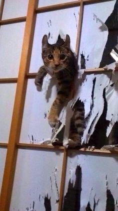 さくら(日本猫(きじとら))