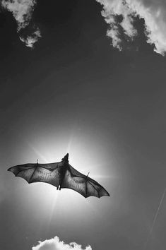 Bats anatomy back lit by moonlight or a rare daylight observation of a fruit BAT that reveals its lightweight but resilient body and bone structure