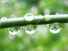 Raindrops with the Refraction of a Green Jungle - Nature in my Garden by Batikart, via Flickr