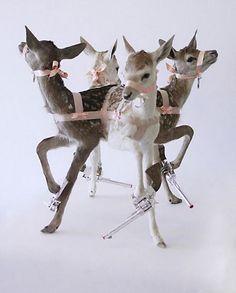 weird-taxidermy-animal-photos14 » The Poke