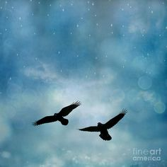 crows flying - Google Search
