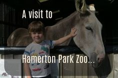 Hamerton Park Zoo Review