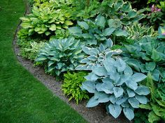 Hosta Bed..... I have several places that would be perfect for a hosta bed like this.