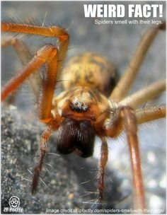 Spiders smell with their legs. - Cool and Interesting Facts for Kids