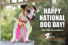 Happy #NationalDogDa