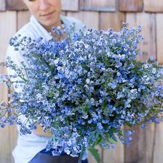 Chinese Forget-Me-Not Blue Showers – Floret Flower Farm Flower Garden Plans, Cut Flower Garden, Flower Farm, Flower Gardening, Cactus Flower, Blue Garden, Dream Garden, Beach Wedding Flowers, Wedding Bouquets