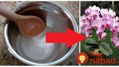 Nekvitne vám orchidea? Stačia tieto dve ingrediencie a bude obsypaná kvetmi – odskúšané, funguje to! Funguje To, Tableware, Dinnerware, Tablewares, Dishes, Place Settings
