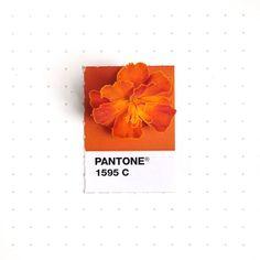 pantone-matches-tiny-pms-match-inka-mathew-7