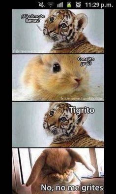 Spanish jokes for kids, chistes para niños Baby Animals, Funny Animals, Cute Animals, Super Funny, Funny Cute, Hilarious, Funny Images, Funny Pictures, Spanish Jokes