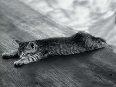 Cat Grayscale, funny wallpapwer for your background desktop, mobile, ipad, iphone