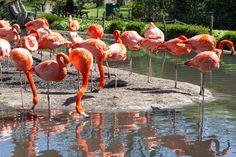 Zootiere: Flamingos einzigartig fotografisch festhalten. Für Aufnahmen von Zootieren ist oft viel Geduld gefragt. #zootiere #fotografie #tierfotos Wir haben tolle Tipps für gelungene Aufnahmen: http://www.fotos-fuers-leben.ch/fotokurs/naturfotografie/tiere-im-zoo-fotografieren/