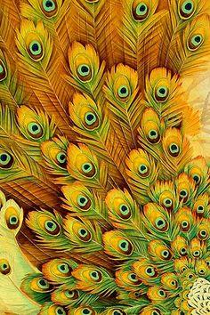 peacock black & yellow combination