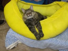 Official Page - Blind Cat Rescue - Meet the cats Snicker