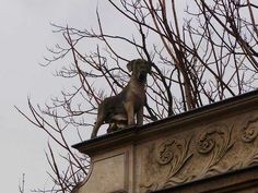 We Take a Photo Tour of a Cemetery for Dogs in France | Dogster