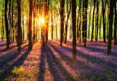 Bos bij Zonsopgang