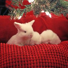 Baby bunnies under the Christmas tree :D