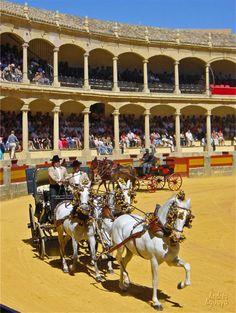 Corridas de toros tienen lugar en LA PLAZA DE TOROS. En el libro Ana y la familia de Marcos compran boletos para ver u a corrida de toros. Ellos deciden ir y Ana es no quiere.