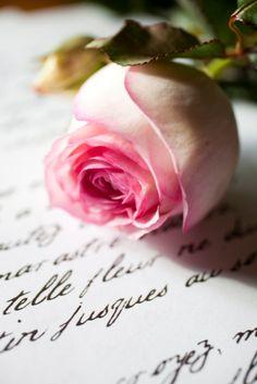Piaget Rose ~ French rose