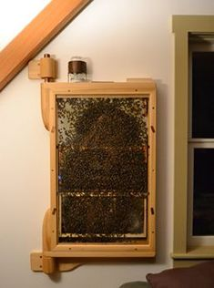 A beehive in the living room? For real. Check out this inereting article on an indoor/outdoor hive . Close Quarters With Honey Bees | Seventh Generation