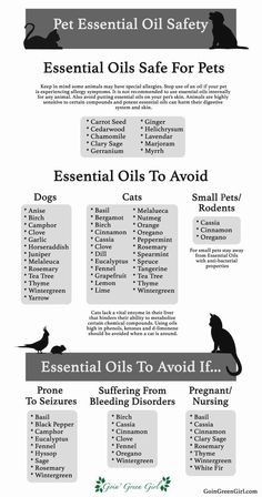 oil for cats Pet Essential Oil Safety Hey guys! Do you like essential oils, not sure which ones are safe for your lovely pets? A list compiled as a quick and easy guide for your reference! Essential Oil Safety, Are Essential Oils Safe, Essential Oil Diffuser Blends, Essential Oil Uses, Young Living Essential Oils, Oils For Dogs, Young Living Oils, Aromatherapy Oils, Doterra Essential Oils