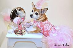 Pink+Floral+Feather+Harness+Dog+Dress+by+KOCouture+on+Etsy,+$150.00