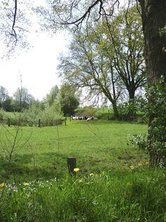 2013-05-09  Rustiek plaatje met rustende koeien onderweg naar de watermolens van Bels en Frans