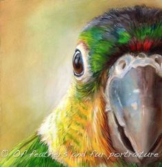 Please vote for this entry in Call for Entries: Pet Portraits! Bird Pictures, Pictures To Draw, Parrot Painting, African Grey Parrot, Animal Paintings, Bird Art, Beautiful Birds, Art Drawings, Animal Drawings