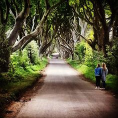 Dark Hedges, County Antrim, Northern Ireland, film location for #GameOfThrones This photo is featured in today's Wanderer's Weekly from Gold Boat Journeys, a Wednesday reflection and list of links to move you. A photo and quote, books, travel, humor and whatever floats our little gold boat. This week: fantasy worlds, the internet, fiction, fact and contagious laughter. Subscribe today: http://tinyletter.com/goodnewsmuse