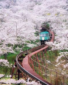 Cherry blossom Japan 2018 forecast — The dates & top 10 best places to see cherry blossoms in Japan - Living + Nomads – Travel tips, Guides, News & Information! Japan Travel Photography, Adventure Photography, Nature Photography, Travel Around The World, Around The Worlds, Places To Travel, Places To Go, Cherry Blossom Japan, Cherry Blossom Pictures