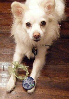 DIY Christmas Tree Paw Print Ornaments DIY Pets DIY Crafts