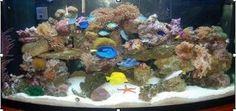 Setting Up Your Saltwater Aquarium