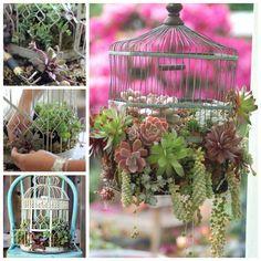 """How to make a bird cage succulent planter """