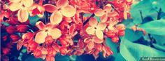 Orange Flowers Facebook Cover