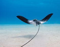 Scuba Diving - Bonaire