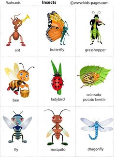 Kids Pages - Insects. great for Japanese vocab English Tips, English Study, English Words, English Lessons, English Grammar, Learn English, English Language, Greek Language, Learning English For Kids