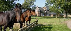Logement Doosje, Warfstermolen, Friesland, Nederland, http://www.supertrips.nl/authentiek/Logement_Doosje_Friesland