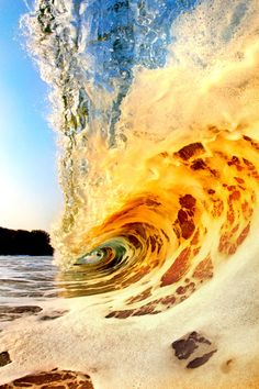 Golden Wave Curl . . . Hawaii