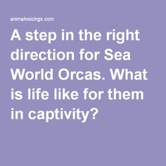 A step in the right direction for Sea World Orcas. What is life like for them in captivity?