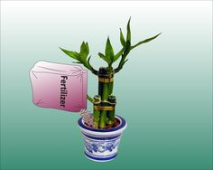 I just got a bamboo plant for my desk. I'll refer back to this often! wikiHow to Take Care of Lucky Bamboo