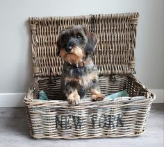 Precious baby in a basket!