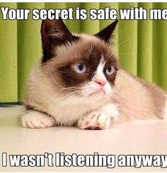 The one and only Ms Grumpy Cat Grumpy Cat Quotes, Funny Grumpy Cat Memes, Funny Memes, Grumpy Kitty, Grump Cat, Kitty Cats, Jokes, Crazy Cat Lady, Crazy Cats