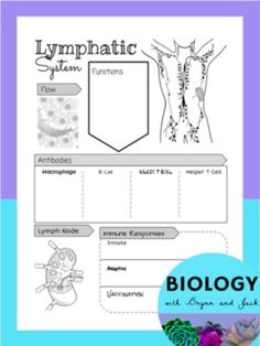 Nervous System Review Worksheet | Ohs bio | Pinterest | Brain lobes ...