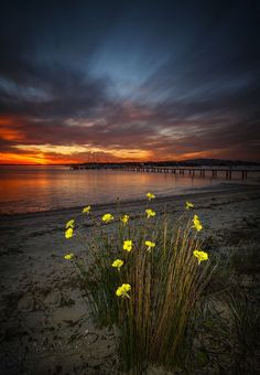 floral skys by shane russell photography on 500px.