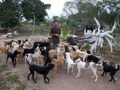 Ricardo started Tierra de Animales only a year ago and is saving hundreds of lives already! What a big, generous, loving guy with a huge heart!  <3